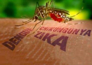 chikungunya – uma possível epidemia de em 2019